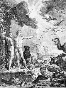 history of animals pdf
